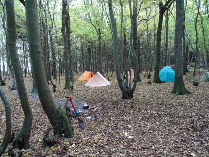 Site in the trees